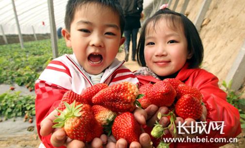 栾城区第十六届草莓采摘节将于3月11日开幕