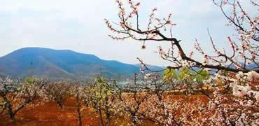 河北最美春天,原来藏在这10个小村里!