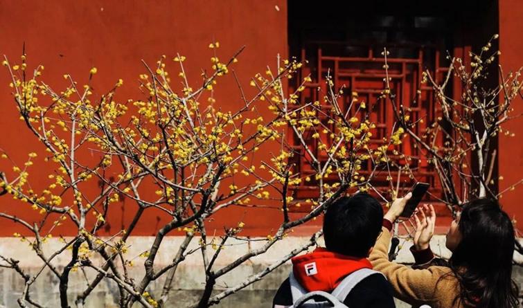 美呆了!北京的早春花…