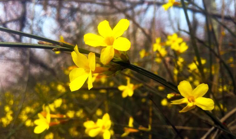 花开了 柳绿了 石家庄春意渐盈盈