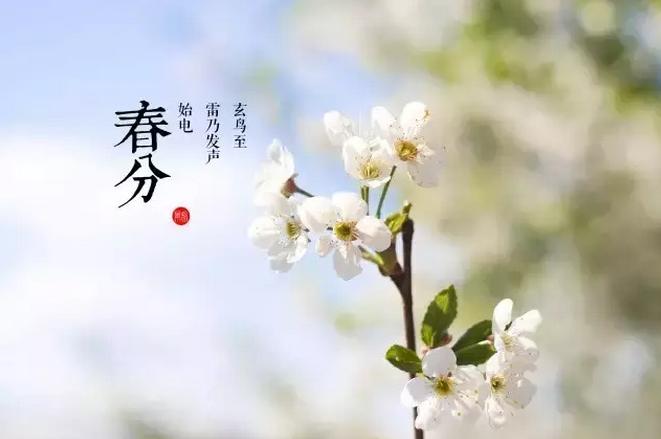 春分丨春和景明 万物竞生