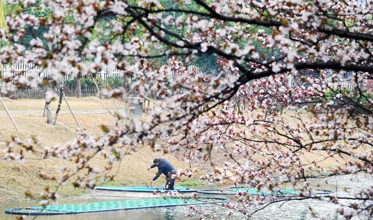 江苏扬州:初春时节 绿化河道