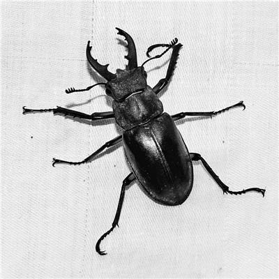 """河北大学博物馆: 一部现实版的""""昆虫记"""""""