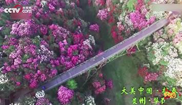 【探春】绵延百里的天然大花园,你见过吗?
