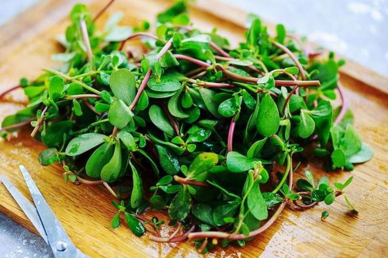 野菜:品尝春天迷人的绿