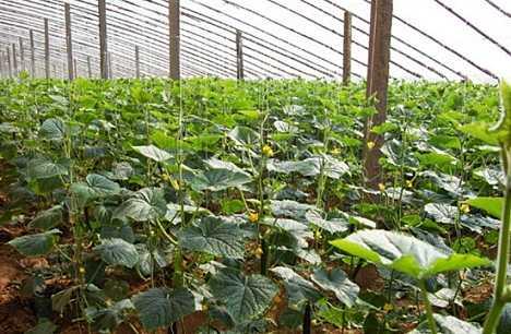 阜城县霞口镇现代农业实现健康快速发展