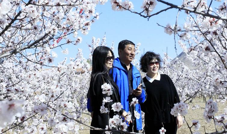 快来赏花啦!春至蔚州惹人醉