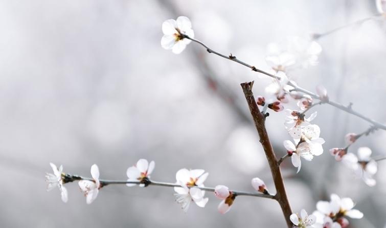 春暖雄安 花开次第