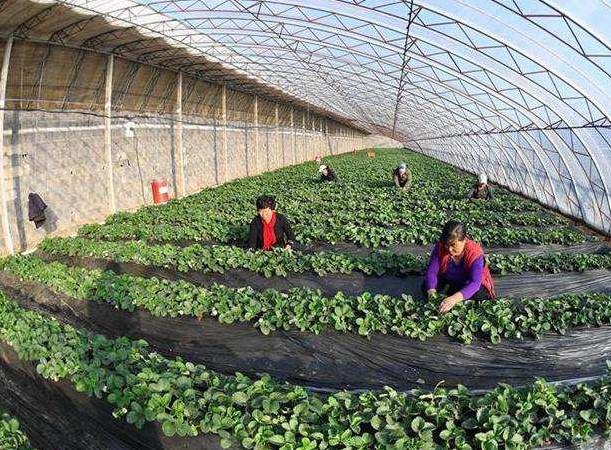 滦县农业供给侧结构性改革 助推现代农业发展