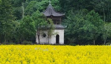 壮观!1分钟油菜花海观影指南带你遍览美丽中国