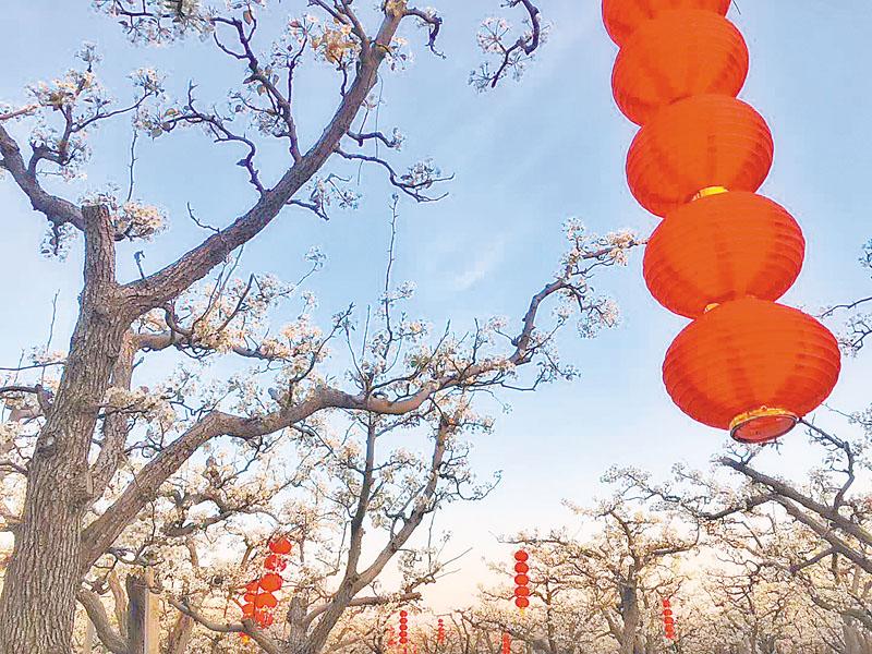 2018首届中国·阜城·霞口梨花节掠影