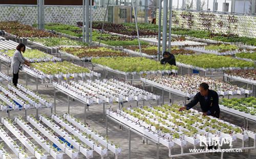 青县农民拓展现代农业产业链走上致富路