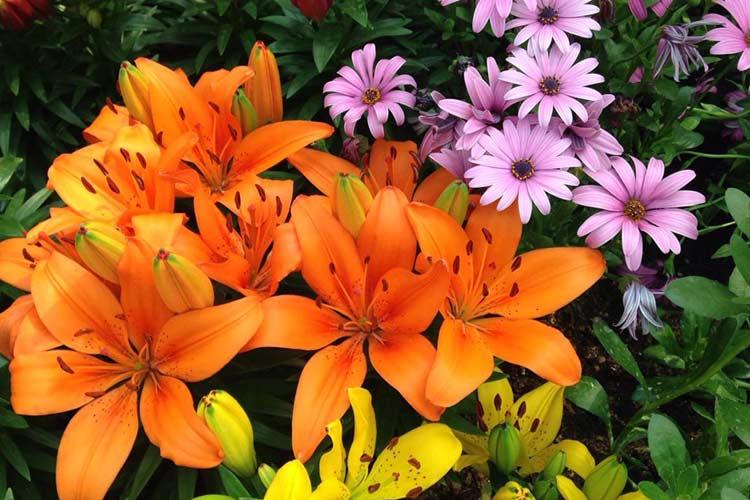 抓住春天的尾巴 石家庄空中花园百花盛开