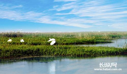 沧州市将严查四个省级自然保护区环境问题