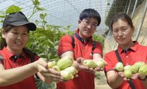 固安:特色种植助增收