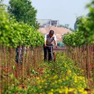 农业美加速生态美