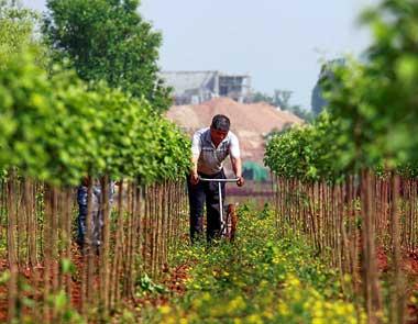 唐山遵化:农业美加速生态美