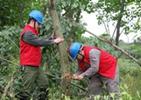 沙河供电公司清理树障保线路安全
