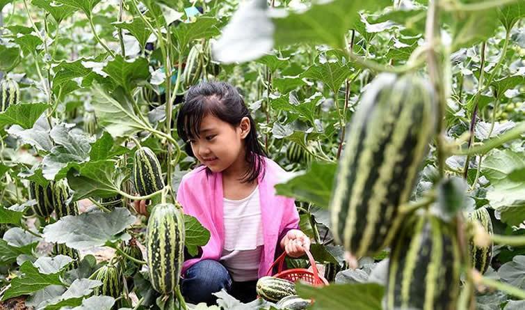 隆尧:生态观光农业助力乡村振兴