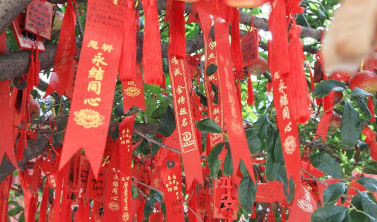 """南京:""""千禧宝宝""""高考临近 """" 金榜题名""""许愿牌挂满树"""