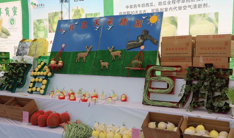 """现实版""""蔬菜开会""""?河北各地蔬菜展销包您眼花缭乱"""