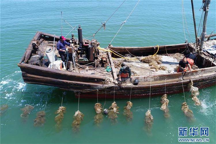 河北乐亭:生态养殖助民致富