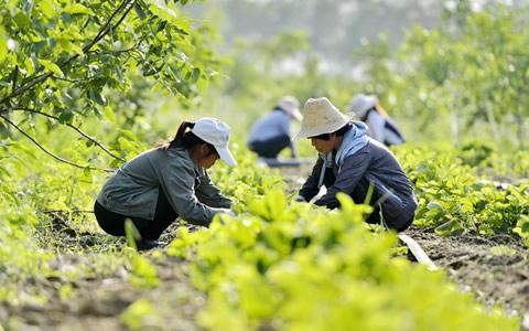 河北沙河:荒山蝶变产业园 农业开发助增收