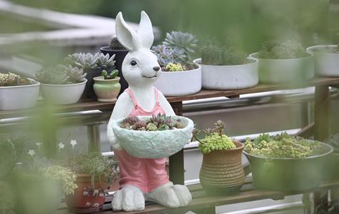 美呆!她用四年时间把家打造成花园