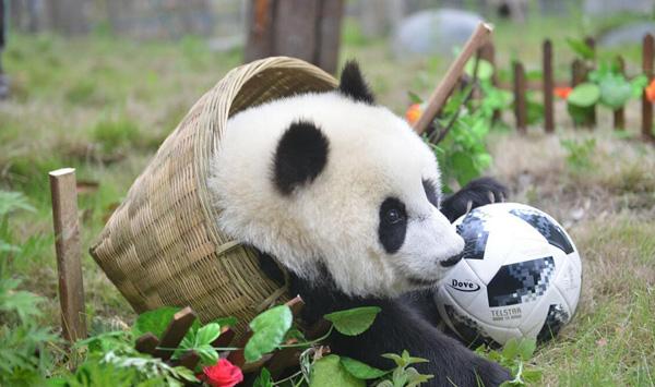 熊猫世界杯开赛: