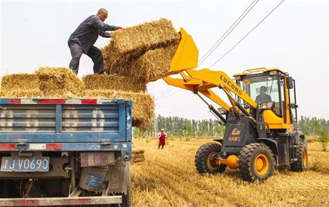 河北永清:小麦丰收秸秆变宝