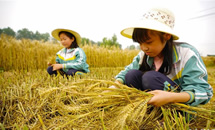 河北滦县:学农事 度假期