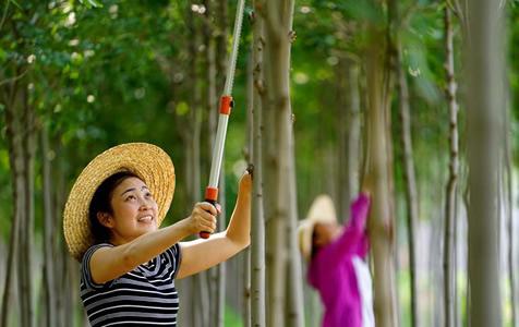河北滦县:苗圃种植促增收