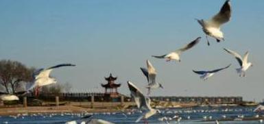 特别策划|河北旅游图鉴·海岛游