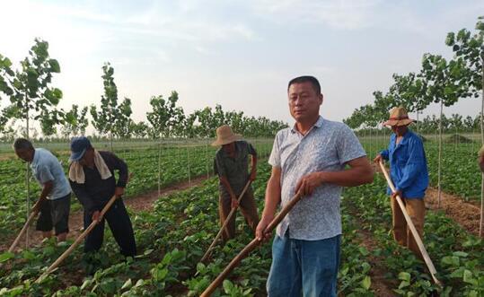 王宪发:乡村振兴路上领头人