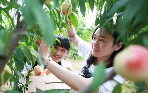 河北内丘:农旅融合助推乡村发展