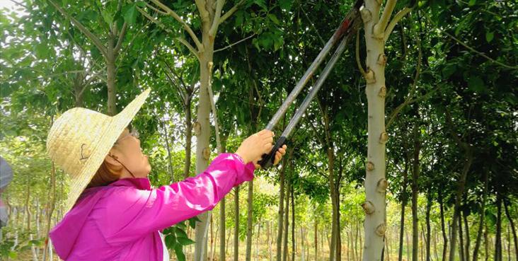 发展特色种植业 滦县东安各庄镇走出一条增收富民路