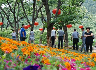 迁西县杨家峪村入选第八批全国一村一品示范村镇