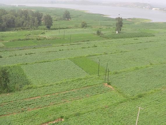 行唐西城仔:红薯红谷红薯茶 农业升级助脱贫
