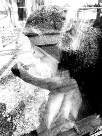 """动物园内游客""""挂面喂猴""""成灾"""