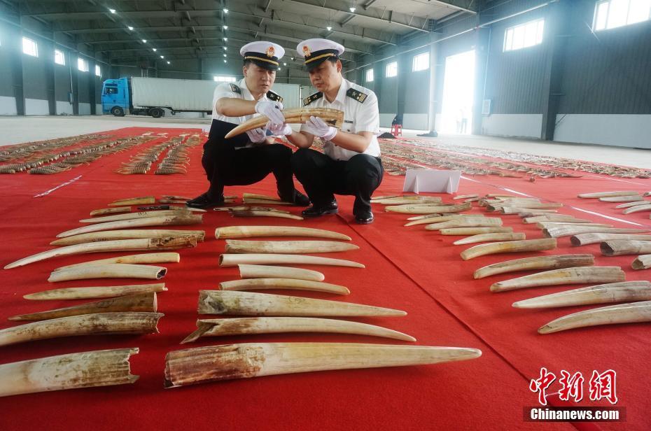 哈尔滨海关破获涉案金额超亿元特大涉嫌走私濒危动物制品案