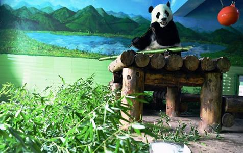 """河北石家庄:动物们乐享多样""""解暑法"""""""