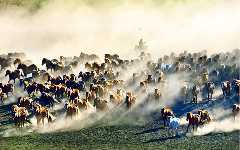 长城拍客第四十期:草原牧歌 激情坝上 万马奔腾