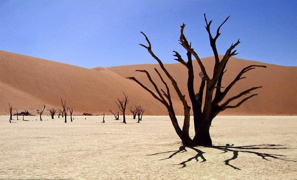 大气颗粒物污染增加树木干旱死亡风险
