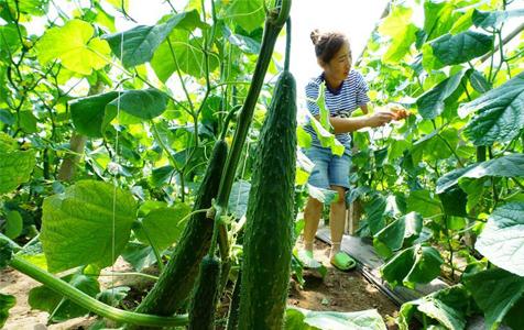 滦南:特色种植助力乡村振兴