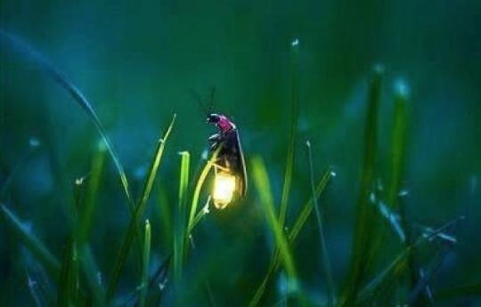 两种特殊物质,萤火虫可以在夜晚发光,看起来十分梦幻.-这是七