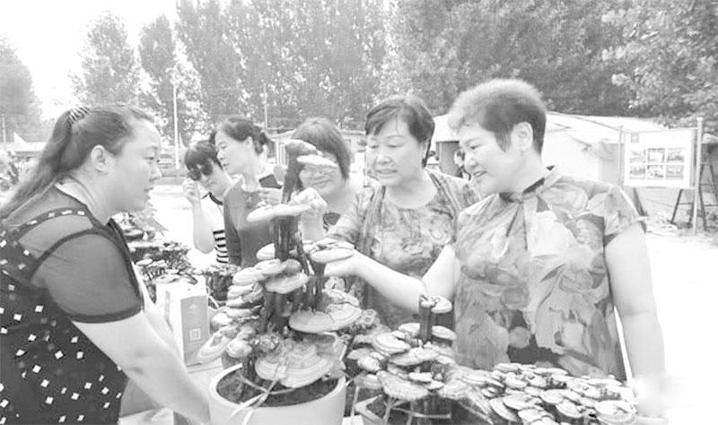 衡水第四届灵芝文化采摘节惊艳亮相