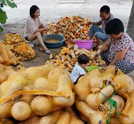滦县:订单式农业助农增收