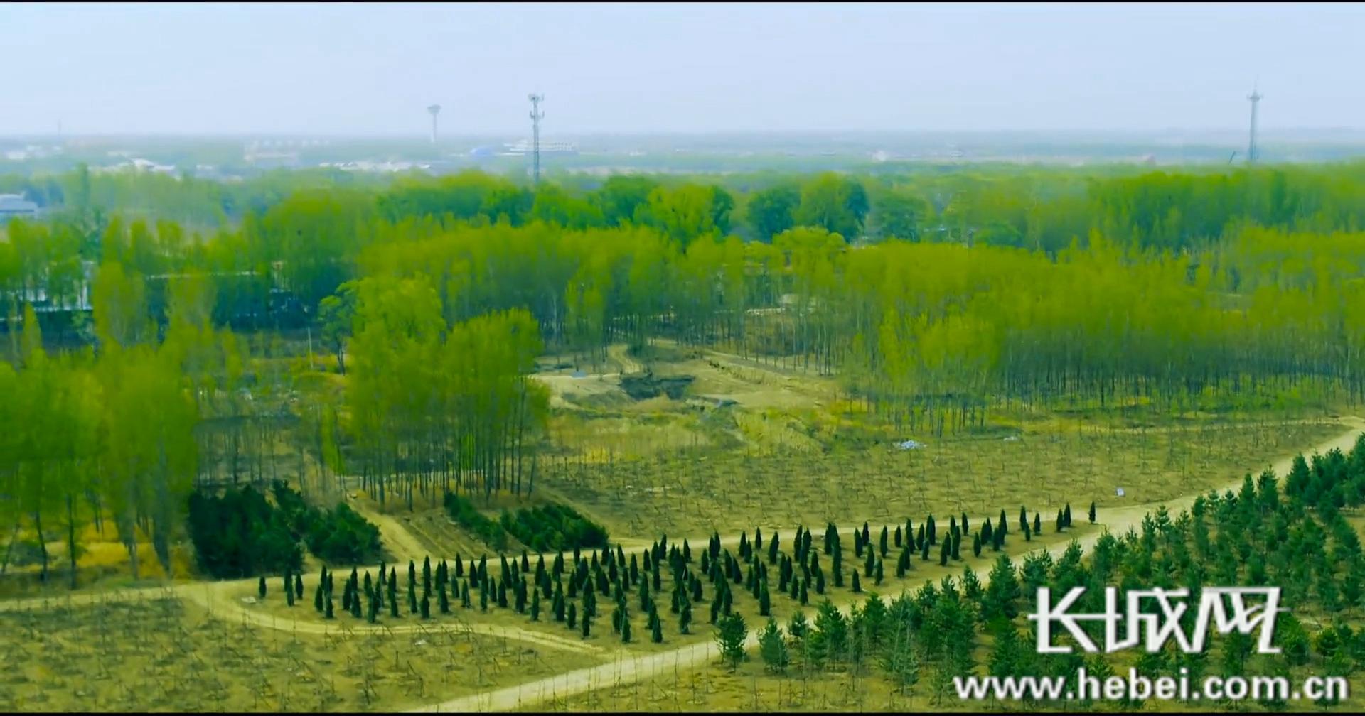 """明年再种10万亩 雄安新区""""千年秀林""""有了新进展"""