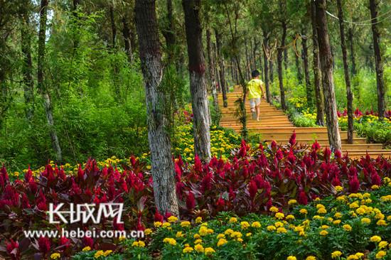 """邯郸峰峰矿区演绎""""矿山""""到""""景山""""华丽蝶变"""