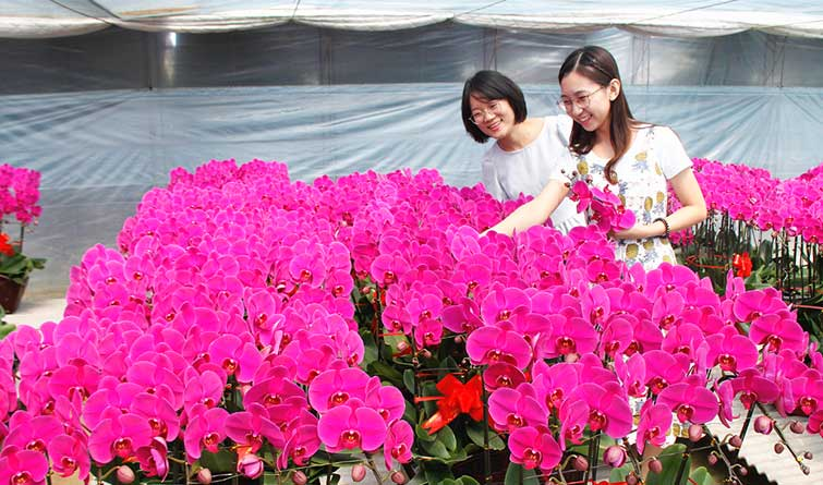 唐山丰润:鲜花经济富农家